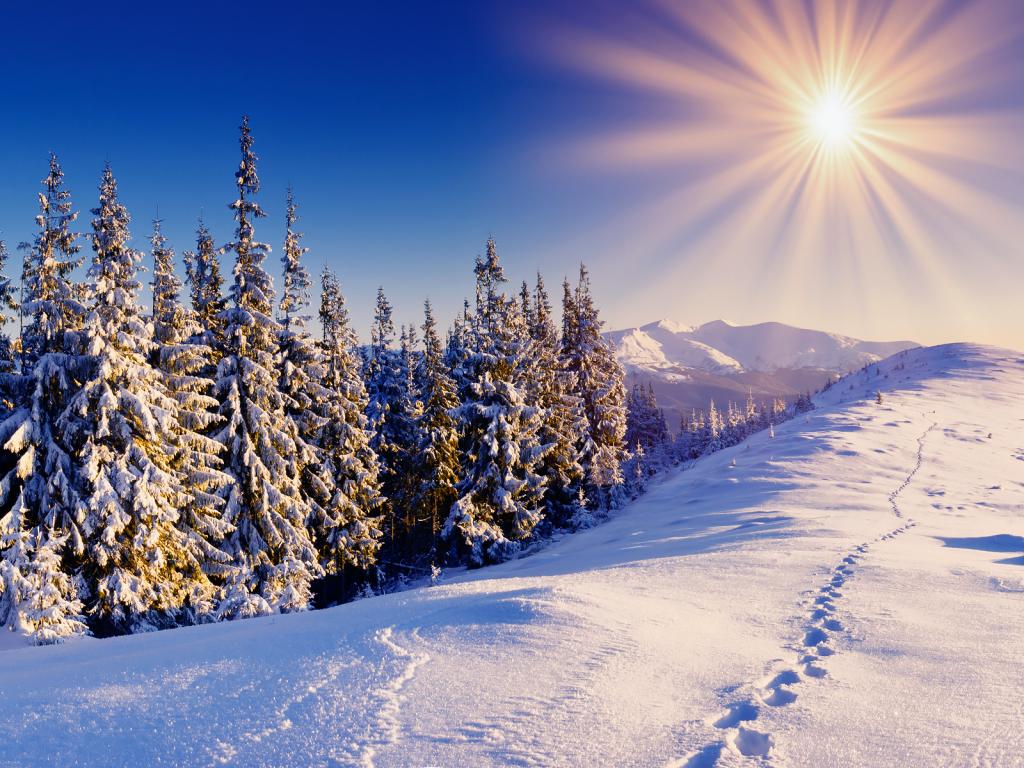 pagan-trees-winter-snow-wall-ink_bluesky